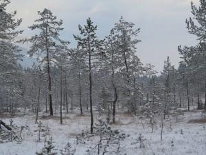 A_Landschaft II